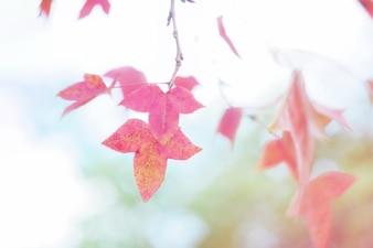 Gelbe und orange Blätter der Zierpflanze im Herbst