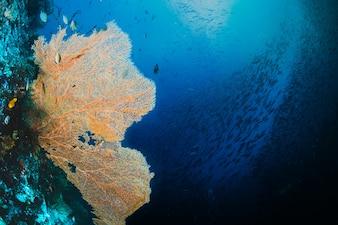 Gelber Seafan mit einem Schwarm Fisch