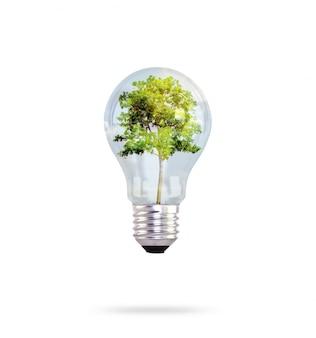 Glühbirne mit Baum im Inneren