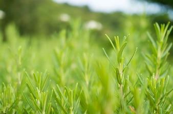 Grüner Gras Hintergrund Selektiven Fokus mit Garten Natur Licht