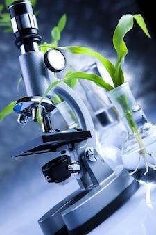 Grünes Experiment Labor Mikro chem