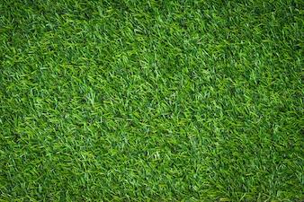Grünes Gras Hintergrund und strukturiert