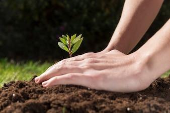 Hände, die eine Pflanze zu pflanzen