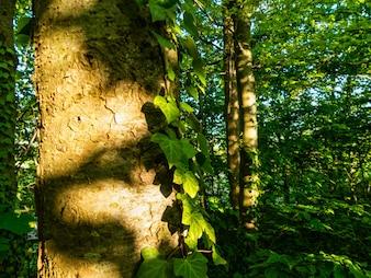 Helle Bäume Öko Bio Leben schön