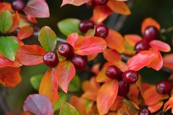 Herbstblätter. Natürlicher saisonaler farbiger Hintergrund
