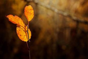Herbstliche Blätter mit defokussiert Hintergrund