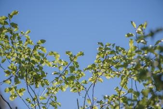 Himmel und Blätter