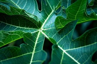 Hintergrund der tropischen Blätter weich fokussiertes Bild Blatt