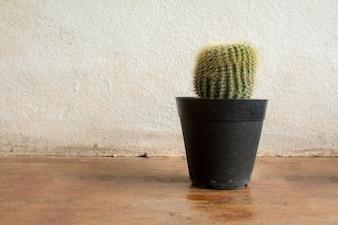 Kaktuspflanzen auf Vintage Hintergrundtextur