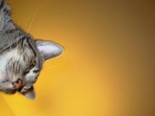 pussy cat cartoon umriss variante download der kostenlosen icons. Black Bedroom Furniture Sets. Home Design Ideas