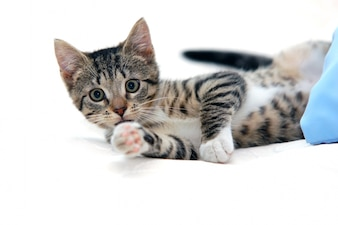 Katze liegend