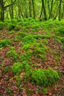 Killarney Wald hdr kostenlos