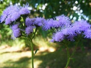 ein wenig lila herbst wildblumen download der kostenlosen fotos. Black Bedroom Furniture Sets. Home Design Ideas
