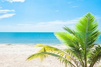 Kokosnussbaumpalme am tropischen Strand