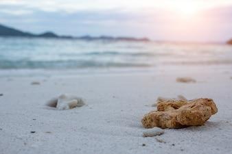 Koralle auf einem Strandhintergrund.