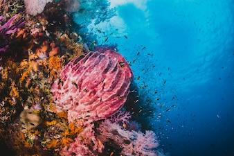 Korallenriff mit Fischen um mit klarem blauem Wasser auf dem Rücken