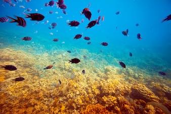 Korallenriffgebiet