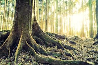 Landschaft Jahrgang Landschaft grün Schönheit