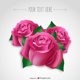Leidenschaftliche rosa Rosen