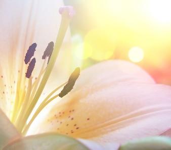 Lily Blume mit Vintage-Effekt