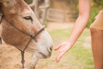 Mann geben essen Esel Bauernhof, Tiere und Natur