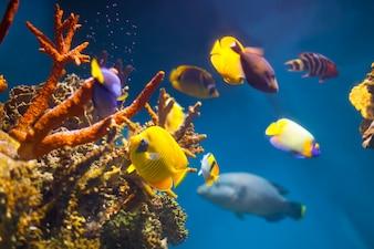 Mehrfarbige exotische Fische