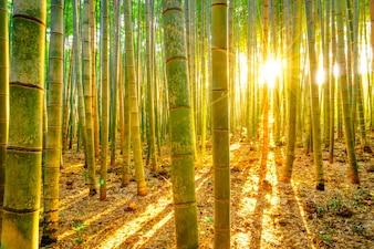 Morgen Fengshui Klima Pfeifen hell