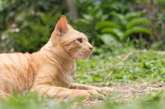 Nahaufnahme der niedlichen gelben Katze bleiben auf dem Boden