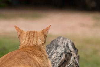 Nahaufnahme der niedlichen gelben Katze bleiben auf im Freien