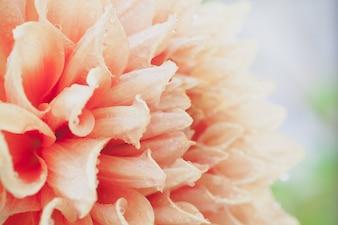 Nahaufnahme Makro Blume