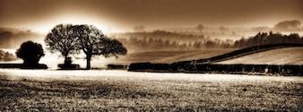 Natur Hintergrund north yorkshire Feld Baum