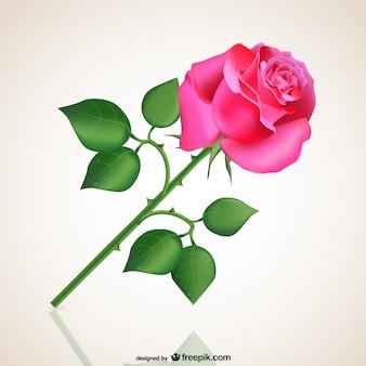 Leidenschaftliche rosa Rose