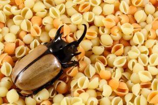 Pasta-Käfer gelb