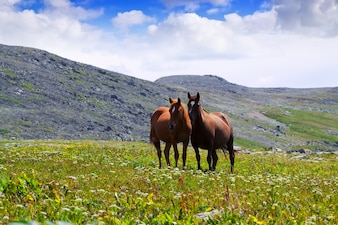 Pferde auf Wiese