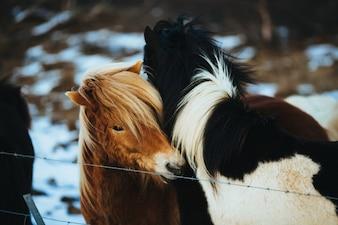 Pferde lieben