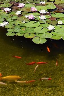 """""""Fisch im Teich mit Seerosen"""""""