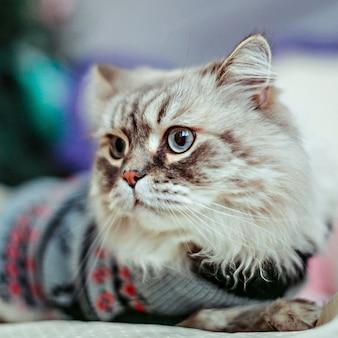 """""""Katze mit Pullover Wegsehen"""""""