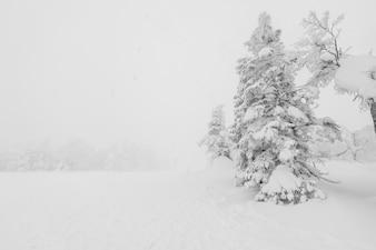 Raureif bedeckt kaltes reiseeis