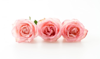 Rosa und weiß stieg