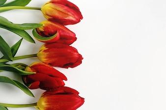 Rote Blumen mit gelben Sockel auf einem weißen Tisch