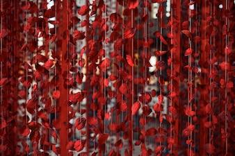 Rote Rosenblätter auf dem Faden
