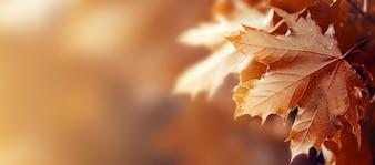Schöne Herbst Blätter auf Herbst Red Background Sunny Daylight Horizontal