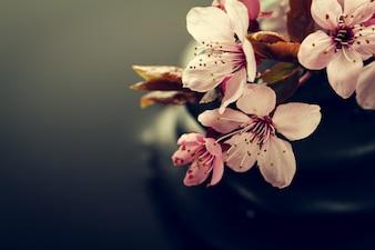 Schöne rosa Spa-Blumen auf Spa Hot Stones auf Wasser Nasse Hintergrund. Seitenaufbau. Text kopieren Spa-Konzept. Dunkler Hintergrund
