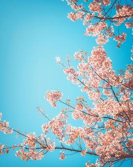 Schöne Vintage Sakura Baum Blume (Kirschblüte) im Frühjahr. Retro-Farbton-Stil.