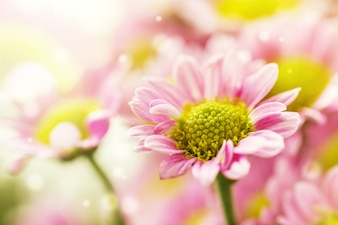 Schöne zarte sanfte zarte Blume Hintergrund mit kleinen rosa Blüten. Horizontal. Text kopieren