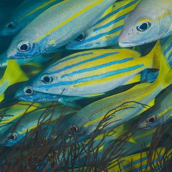 Schule von tropischen Fischen auf einem quadratischen Format