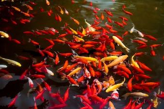 Schwarm von bunten Fischen