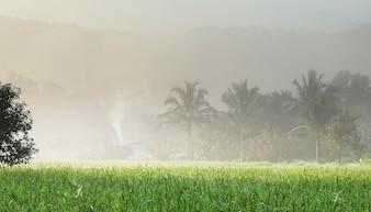 Schwerer Nebel mit grünem Reisfeld auf Morgensonne Licht