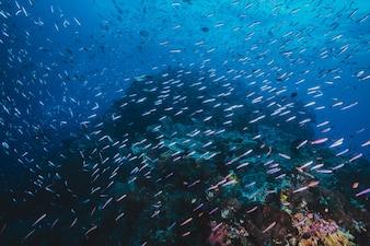 Seelandschaft von einem Schwarm von Fisch