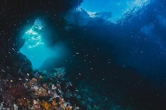 Sonnenlicht steigt in eine Unterwasser-Grotte im Salomon Islan